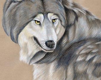 Grey Wolf Original Drawing