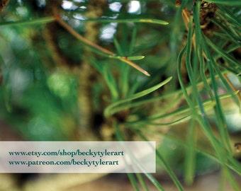 Black Oak Bonsai Macro Fine Art Photo Print