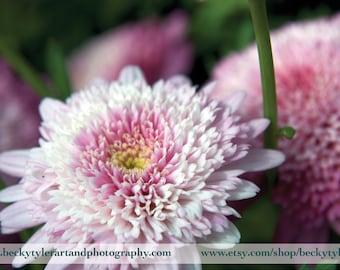 Dahlia, Digital Photography, Fine Art Photo Print