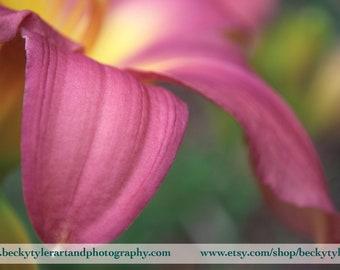 Pink Day Lily Macro Fine Art Photo Print