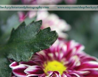 Orinoco Flower Macro Fine Art  Photo Print