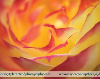 Rose, Macro Photography, Fine Art  Photo Print