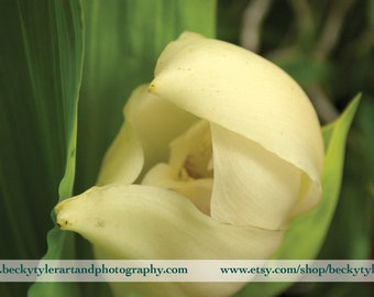 Anguloa Orchid Fine Art Photo Print