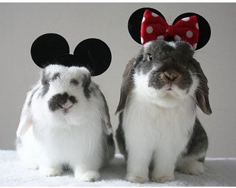 Mouse ears / red bow tie for guinea pigs, bunny rabbits and small pets.