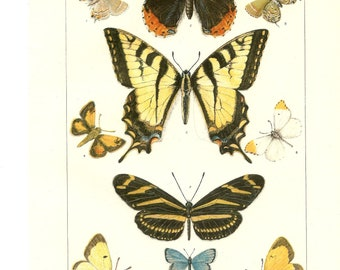 Encyclopedia Art, vintage, 1917, illustration, decor, American BUTTERFLIES, 1902