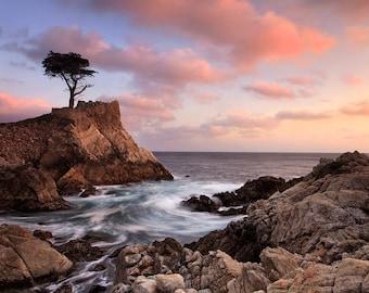 California Photo, Big Sur Photography, Beach Picture, Lone Cypress Tree Sunset,Pebble Beach Photo, Coastal Art, Large Art Purple Pink Beige