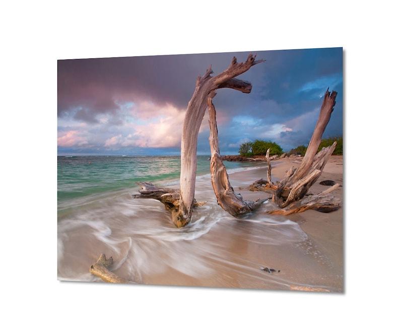 Metal Photo Print, Caribbean Beach Photo, Driftwood Photography, Large  Metal Wall Art, Coastal Decor, Blue Purple Teal, Seascape Picture