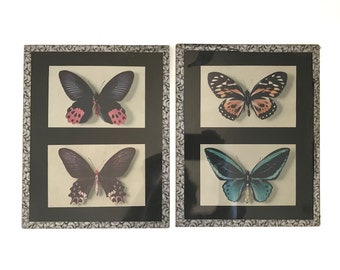 Pair of Vintage 1950s French Butterfly Prints in Glass Frames