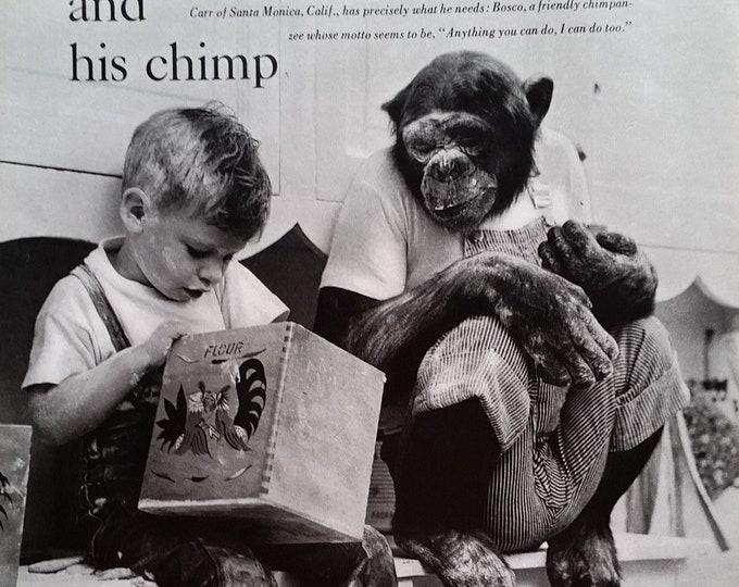 Bonzo, Chimp & Boy Trainers Home eating playing Fun Partnership Chimpanzee BW Photos Santa Monica CA Carr 1964 Funny Ready for Framing.