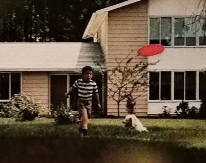 Frisbee Disc Golf Ultimate Fanatics Proof Disc Throwing Life in Mid-60s US Steel ad young boy tossin Air Bounce Frisbee Bored Sheepdog.