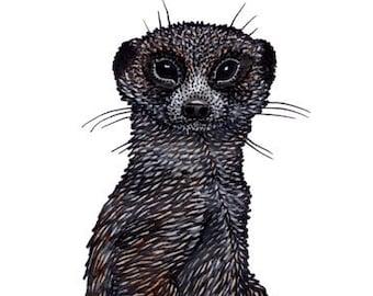 Meerkat / Suricata suricatta HQ Giclee Print