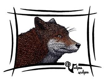 Red Fox / Vulpes vulpes - HQ Giclee Art Print