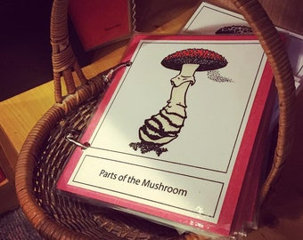 Parts of the Mushroom • Montessori 3 Part Card Printable Instant Download