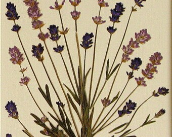 Lavender Herb Print wall decor herb art prints set of four herb art lavender art lavender