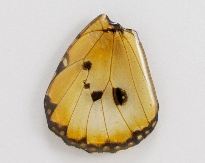 Real Danaus chrysippus Hind Wing Pendant or Necklace With Options