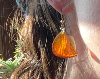 Real Butterfly Wing Earrings Blood Red Glider Cymothoe sangaris Sterling Silver Gold Ball French Hook