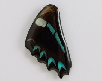 Real Graphium sarpedon Hind Wing Pendant or Necklace With Options