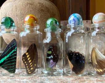 Real Butterfly Wing in Bottle M-2 Specimen Jar ethically sourced Funds Conservation