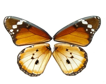 Real Butterfly Danaus chrysippus Full Necklace With Options