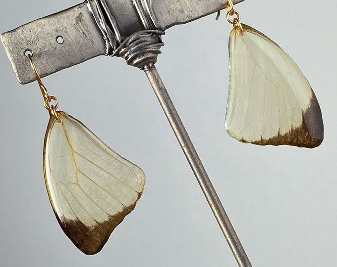 Real butterfly wing earrings Cambridge Vagrant Nepheronia thalassina gold ear wires