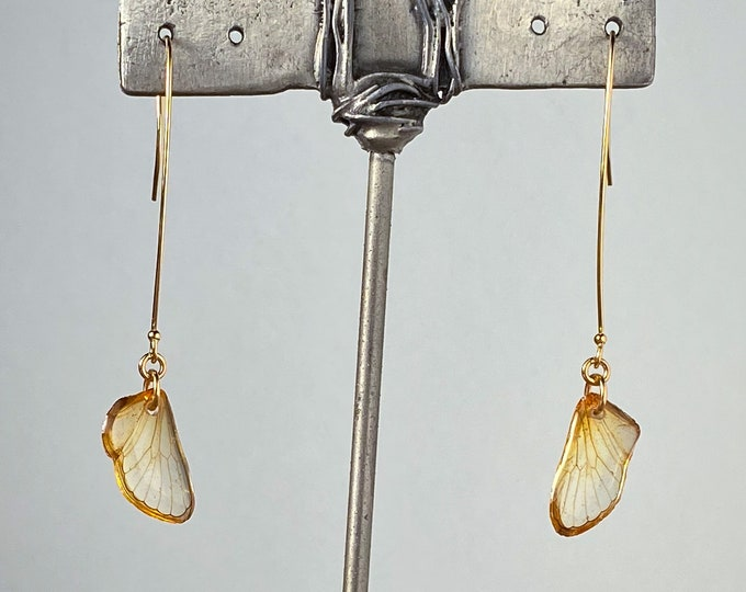 Real Cicada wing earrings Kansas gold long ear wires