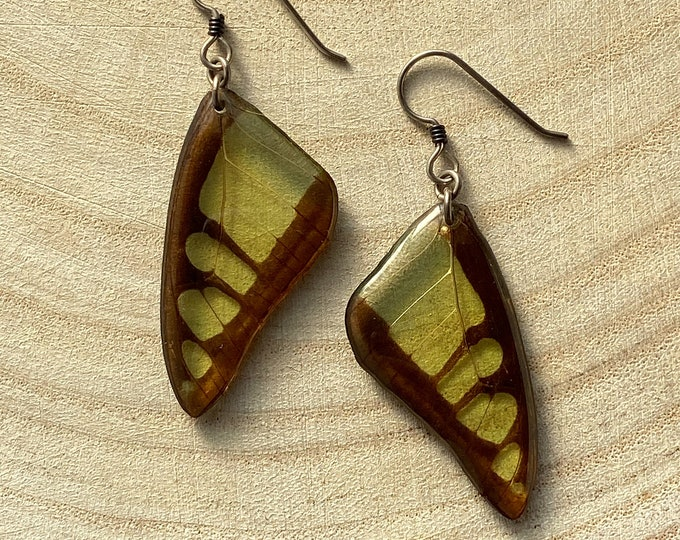Real butterfly wing earrings Green Triangle Butterfly (Graphium macfarlanai) sterling silver Niobium