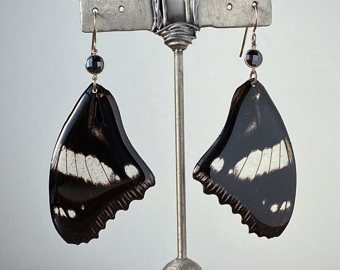Real Gladiator Butterfly Wing Earrings (Hyploimnas dexithea) sterling silver ear wires faceted onyx