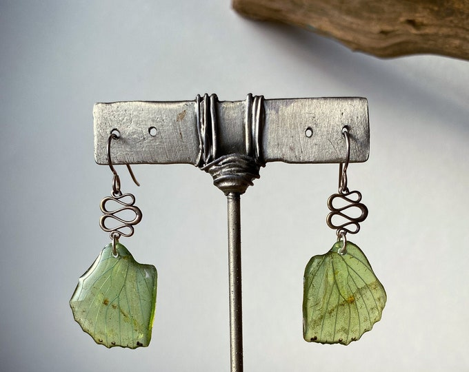 Real Butterfly Earrings, Green Leaf Wing Butterfly (Charaxes eupale) sterling silver ear hooks