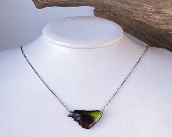 Real Butterfly Necklace, Jewelwing Butterfly (Graphium weiskei) with sterling silver cable chain