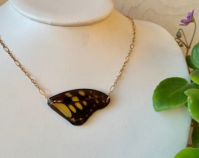 Real Butterfly Necklace (Graphium cyrnus) gold chain