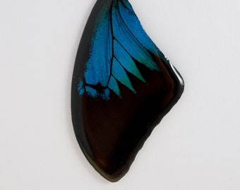 Real Papilio ulysses Fore Wing Pendant or Necklace With Options