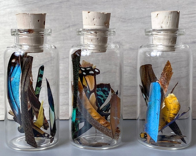 Real Butterfly Wing Confetti Jar Bottle Medium Ethically Sourced Funds Conservation