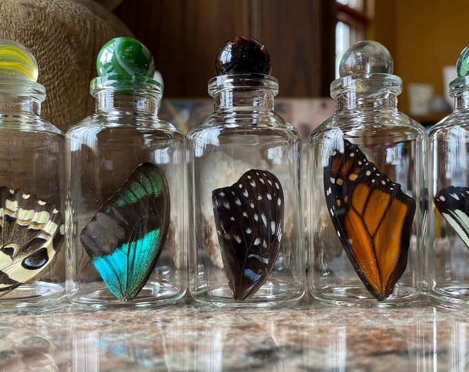 Real Butterfly Wing in Bottle Medium Specimen Jar ethically sourced Funds Conservation
