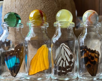 Real Butterfly Wing in Bottle Small Specimen Jar ethically sourced Funds Conservation