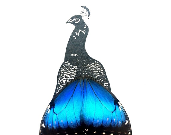 Peacock with Real Butterfly Wings Framed Art - Disabled Veteran Made Frame - Ink Illustrations by Holly Ulm
