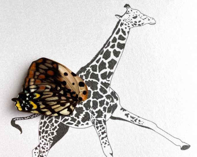 Giraffe Real Butterfly Wing Framed Art - Disabled Veteran Made Frame - Ink Illustrations by Holly Ulm