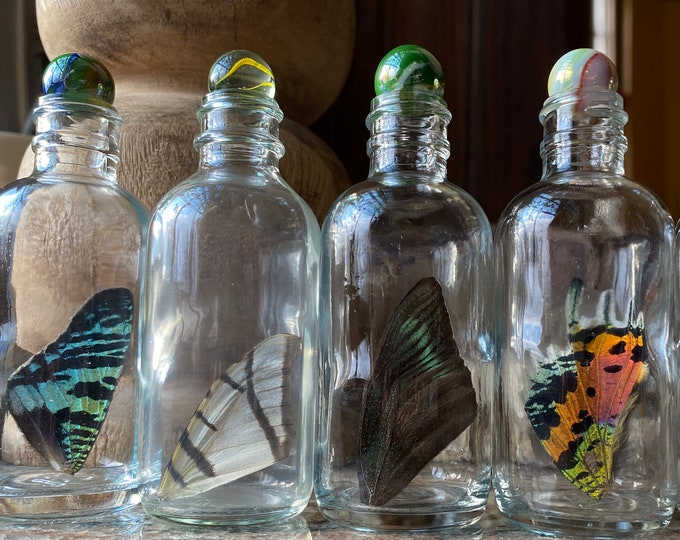 Real Butterfly Wing in Bottle XLarge Specimen Jar ethically sourced Funds Conservation