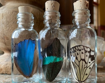 Real Butterfly Wing in Bottle Large Specimen Jar ethically sourced Funds Conservation
