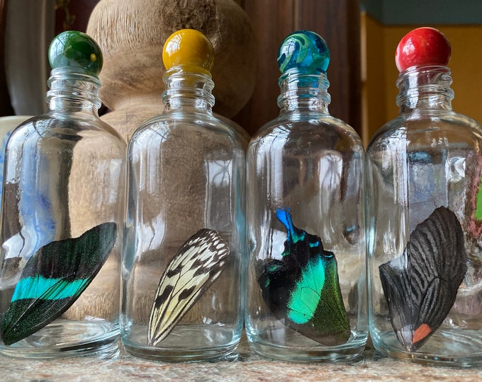Real Butterfly Wing in Bottle XXLarge Specimen Jar ethically sourced Funds Conservation
