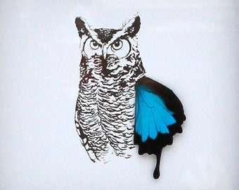 Owl Real Butterfly Wing Disabled Veteran Made Frame Illustration by Holly Ulm