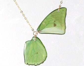 Real Charaxes eupale Wings Half Butterfly Necklace With Options