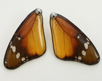 Real Danaus chrysippus Fore Wing Earrings With Options