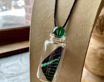 Necklace Real Butterfly Wing in a Jar with Options Funds Conservation
