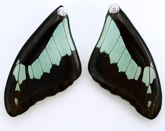 Real Papilio phorcas Fore Wing Earrings With Options