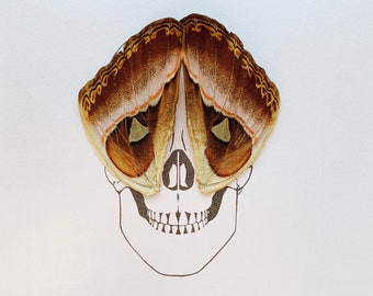 Skull Day of Dead with Real Butterfly Wings Framed Art - Disabled Veteran Made Frame - Ink Illustrations by Holly Ulm