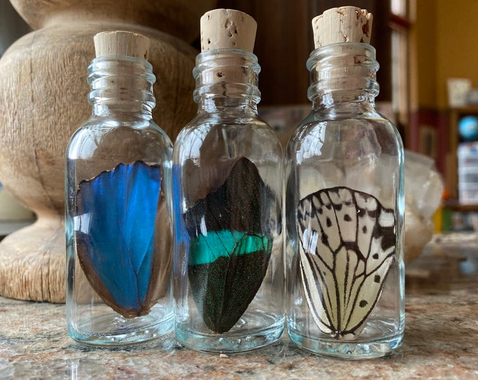 Large Real Butterfly Wing in a Jar Funds Conservation