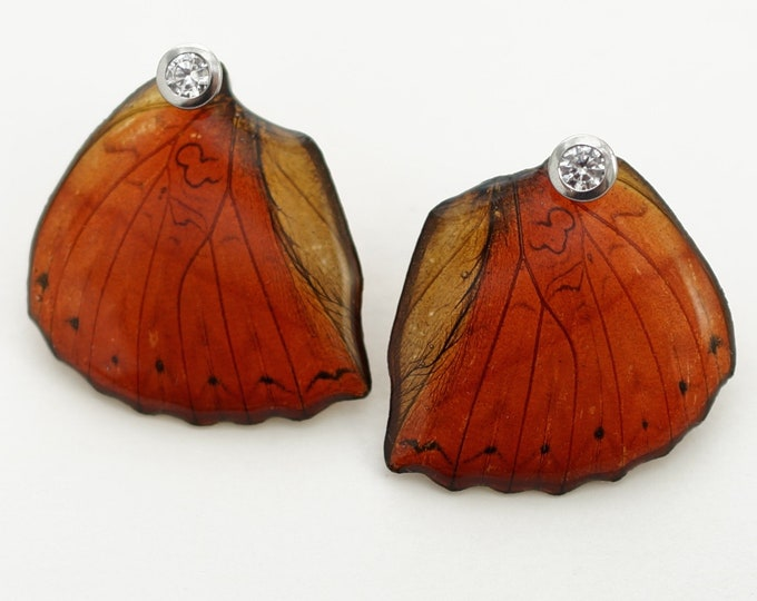 Valentine Sale! Real Cymothoe sangaris Hind Wing Earrings With Options