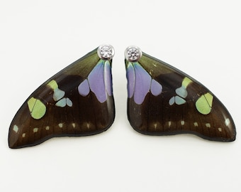 Real Graphium weiskei Fore Wing Earrings With Options