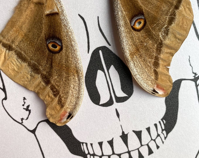 Valentines Sale! Skull Eyes Real Butterfly Moth Wings Framed Art - Disabled Veteran Made Frame - Ink Illustrations by Holly Ulm