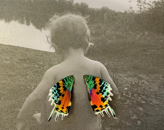 Your Custom Photo with Real Butterfly Wings Framed Art - Disabled Veteran Made Frame